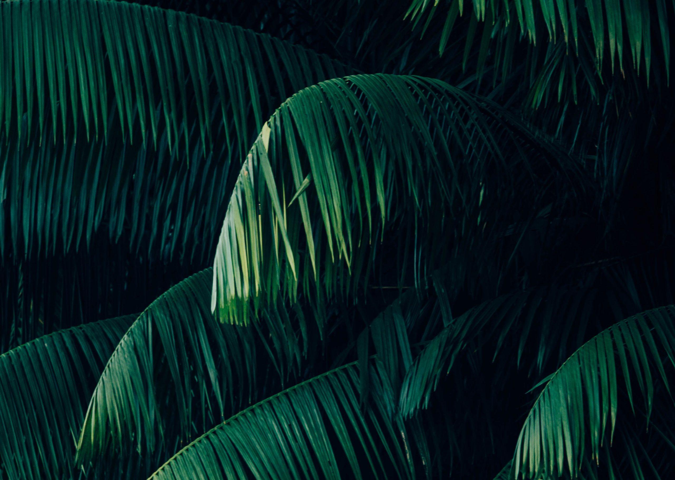 Latin Amerika növény dzsungel
